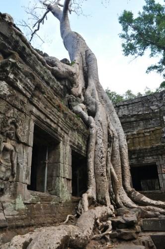 Angkor Ta Prohm 4