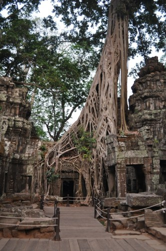 Angkor Ta Prohm 8