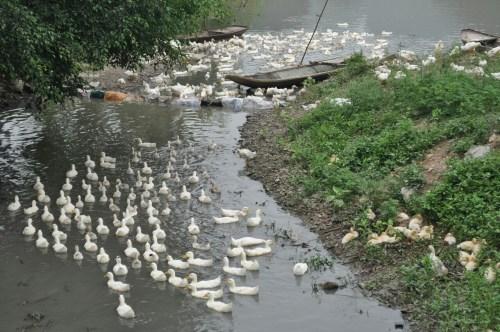 rivière Tam Coc
