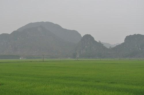 rizières Tam Coc 2