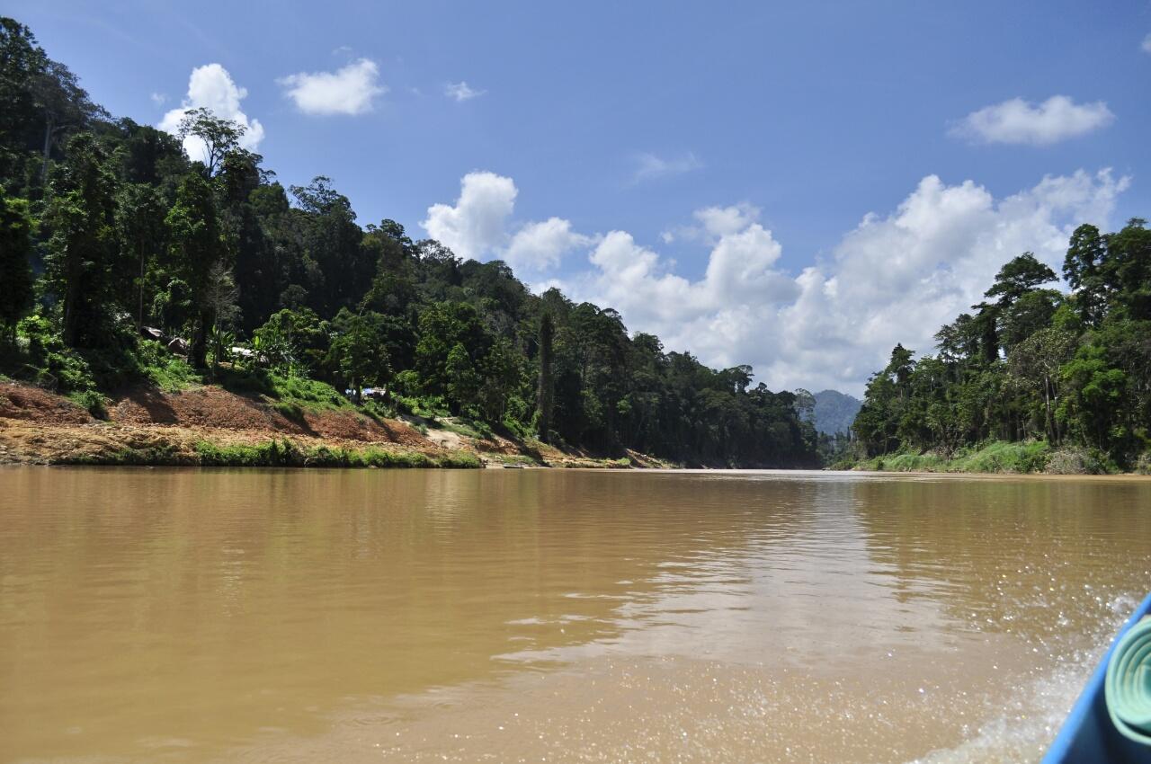 Taman Negara : la jungle en deux jours !