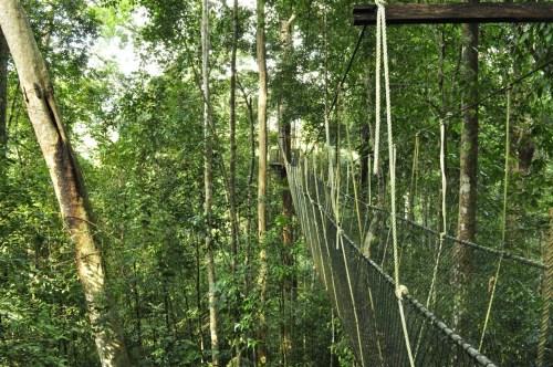Taman Negara canopy walk 2