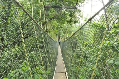 Taman Negara canopy walk 3