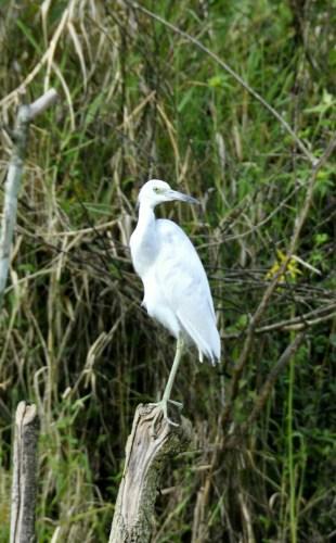 Oiseau Lac de Yojoa 3