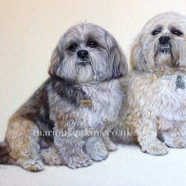 'Alfie & Lily' the Lhasa Apso is a double pet Portait. They are depicted sitting together proudly displaying their dog tags. They have cute little faces showing the underbite typical of their breed