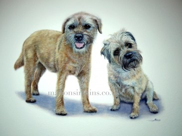 'Archie & Lily' Double Border Terrier portrait. Archie is standing looking at the viewer with his mouth slightly open and Lily is sitting to his side leaning towards him with her head cocked and listening