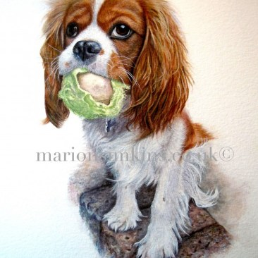 'Bertie' King Charles Cavalier is a cute little puppy sitting on a wall. He is depicted full body with a half chewed tennis ball in his mouth