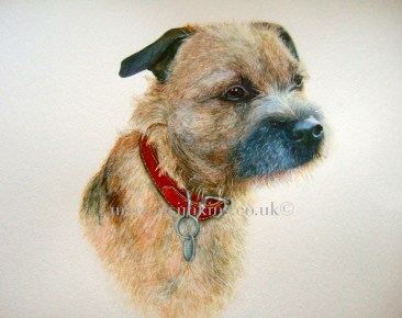 'Billy' Border Terrier is a head & shoulder pose of Billy looking to the right of the viewer. He is wearing a tan collar and silver dog tag