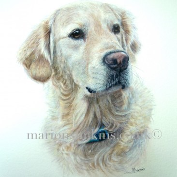 'Bramley' is a Golden Retriever watercolour dog pet portrait. The pose is of his head and shoulders and he is looking to the right of the viewer with large brown eyes.
