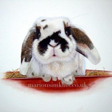'Daisy' the house rabbit is an original pet portrait in watercolour. Daisy is mainly white with chocolate patches on her ears and a semi-circle patch around her nose. She is sitting in a bed of straw with her paws showing on the edge of the red tray.