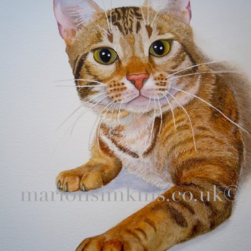 'Georgie' the cat - is a partial body cat pet portrait in Watercolour. Georgie is looking directly at the viewer with huge green eyes, one paw outstretched as though he is about to pounce.