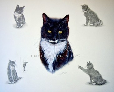 'Max' the Cat is a black & white head & shoulder watercolour montage cat pet portrait. Max is in the middle of the painting, in each corner are smaller pencil drawings of Max in various poses typical of his character. Max has big yellow eyes.