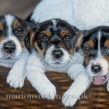 A close up taken from an oil on linen bespoke pet portrait commission of five Jack Russell puppies in a wicker basket with their mother.