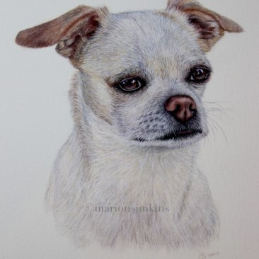 Cashew mixed breed dog-Watercolour-pet portrait-hand painted-commissioned-Wedding present