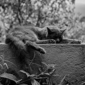 Cat asleep on a wall - Photo by Iván C. Fajardo on Unsplash