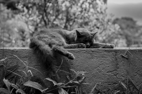 Cat asleep on a wall - Photo by Iván C. Fajardo on Unsplash