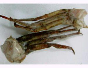 Imagen del producto patas en Mariscodehuelva.es