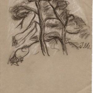 A-027 – Bomen zwart en wit krijt 285×166