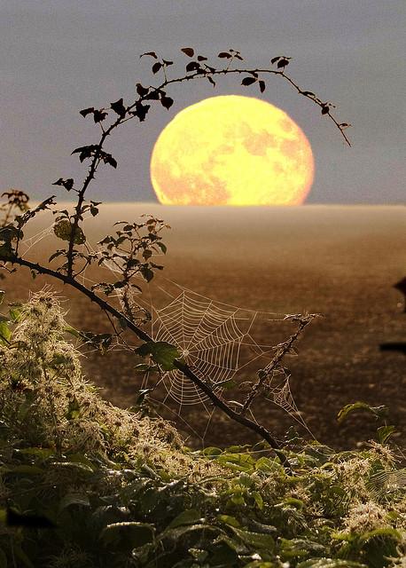 Spiderweb Moon, Fawler, England