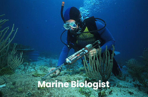 A marine biologist from the Florida Keys National Marine Sanctuary uses a glue gun to reattach a piece of living coral broken lose when a boat went aground on the shallow coral reef.