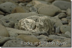Rocks at the Hoh