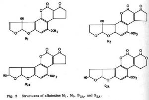 Aflatoxine secundare