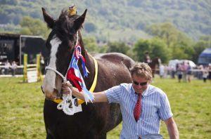 shire_horse_champion_sm.jpg