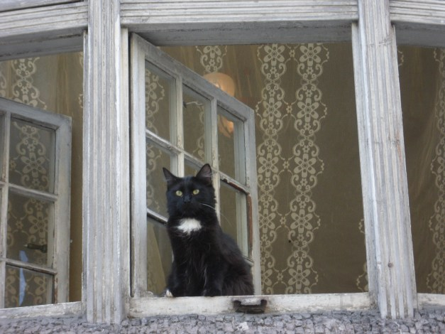 OK, that's just a regular cat in a window, but hey, it's my blog