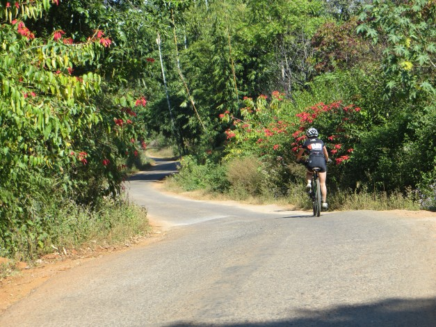 It's not all gravel. This is Marlene heading downhill on pavement surrounded by wild poinsettias. Appropriately, this was on Christmas Day.