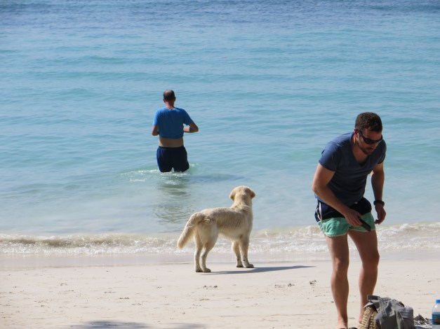 """Mark playing fetch with a dog that just didn't get it. The dog really wanted to play - we'd watched him walking up and down the beach trying to get people to play with him - so Mark found a stick and threw it. The dog just looked as if to say """"YOU go get it."""" So Mark got it and tried it again..."""