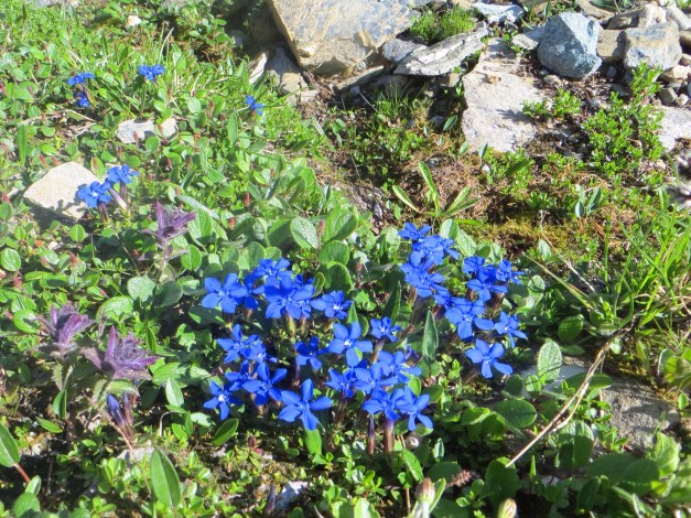 Oh yeah - lots of Alpine flowers up there. Who'd have guessed?