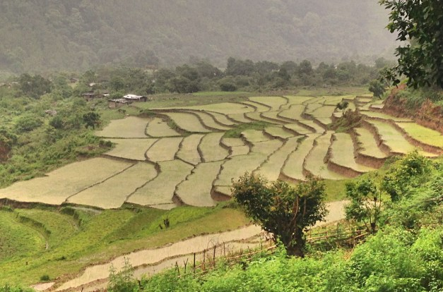Never too many pictures of rice fields