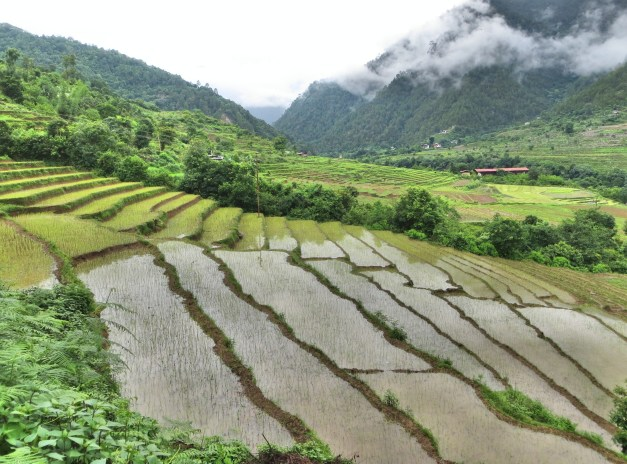 Lots of rice fields in Punakha
