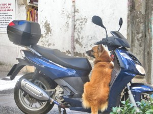 One day we had lunch on the patio outside a Lebanese restaurant. A guy came out of his building with his scooter and a very excited dog. As he went back to lock things up the dog climbed up on the scooter, confident - correctly, it turns out - that he was going on a ride with his master. Too cute.