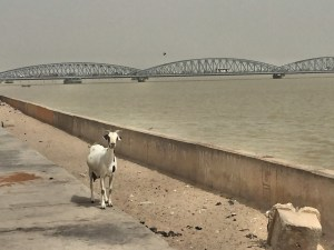 There are lots of goats roaming around Saint-Louis. That's the Pont Faidherbe in the background connecting the island on which Saint-Louis sits to the mainland. It's a 19th century bridge designed by Gustav Eiffel that was moved to Senegal in 1897.