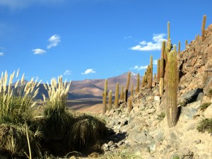 Cacti and beautiful scenery in our little canyon excursion