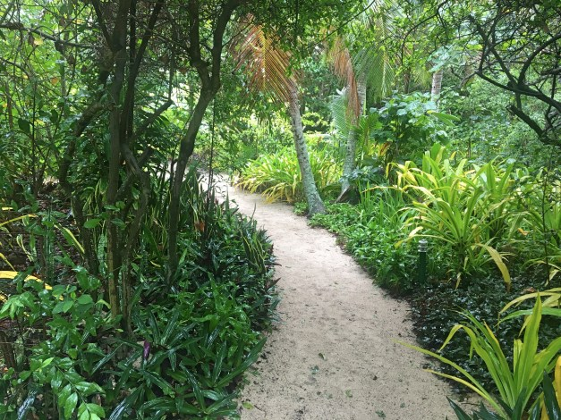 A path through the lush vegetation to our fale
