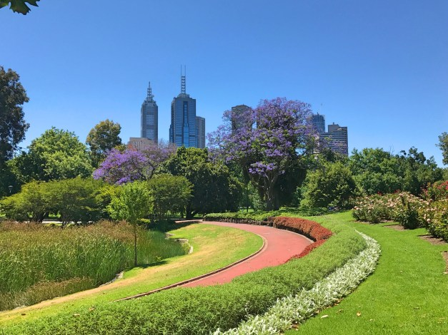 Beautiful parks, beautiful skyline, and as a big bonus, jacaranda trees - my favorite! - in bloom