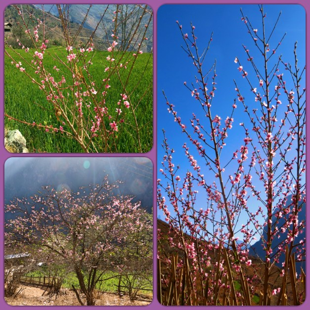Didn't think I'd write a blog without cherry blossoms did you?