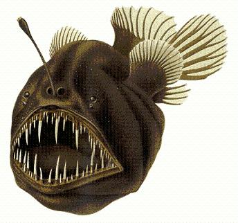 Humpback_anglerfish2.PNG