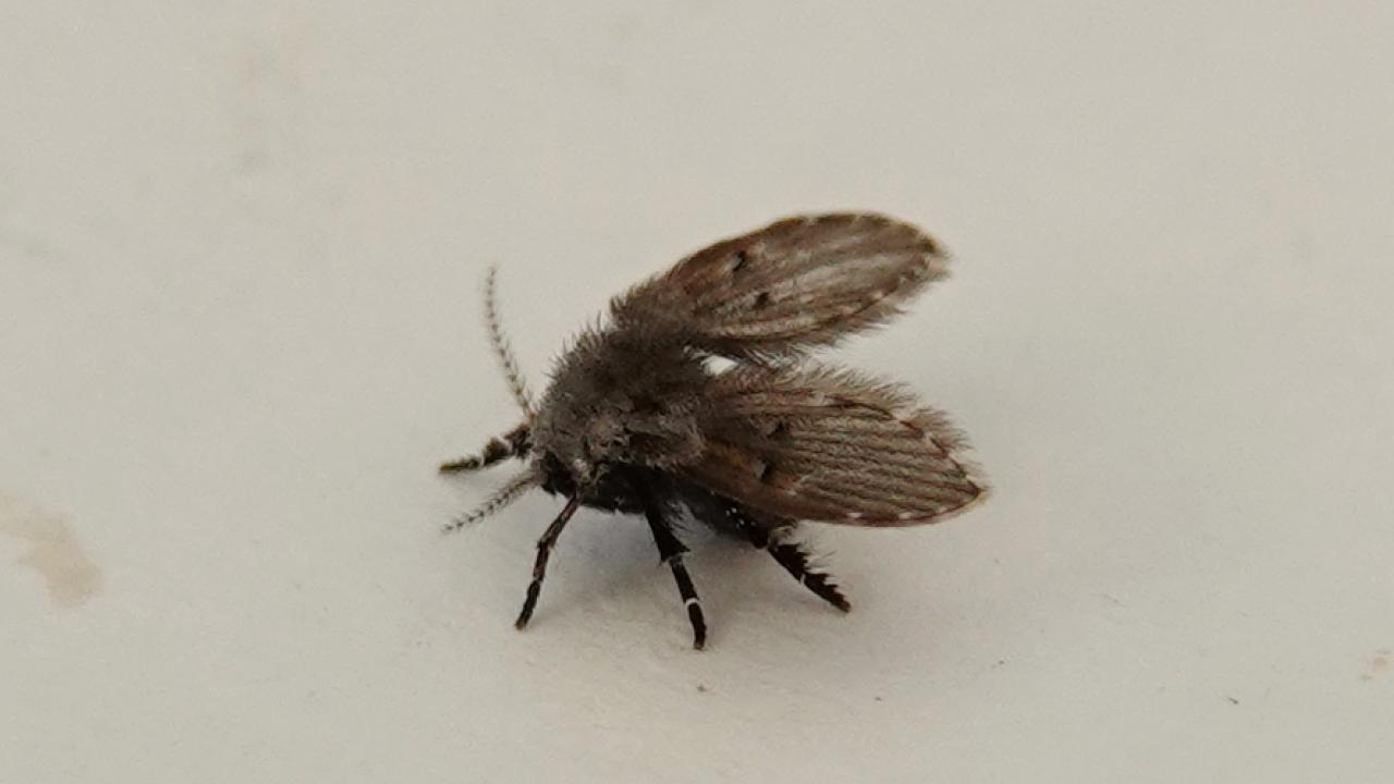 Bathroom Moth Fly Markeisingbirding