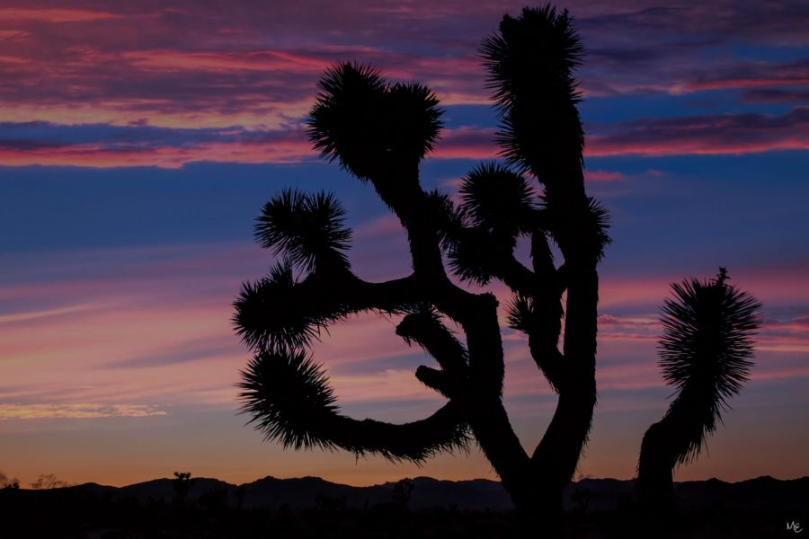 Mark Epstein Photo | Desert Silhouette