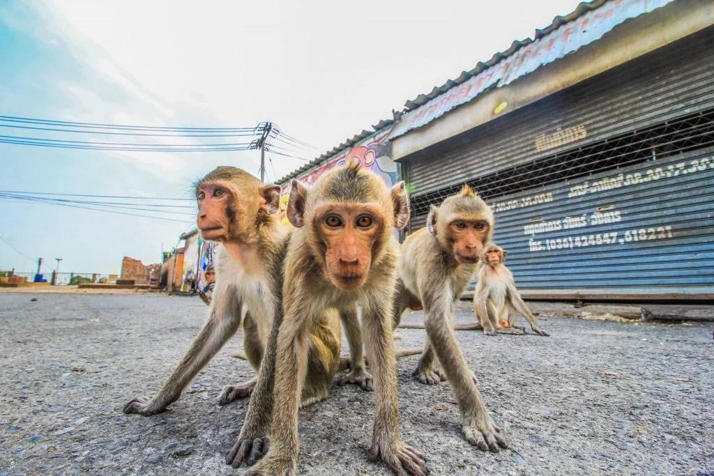 不懂管理部屬。你就做到累死!猴子管理法。找回高效工作力   行銷人