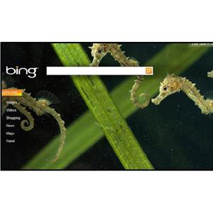"""Bing podría añadir el botón """"me gusta"""" en sus búsquedas"""