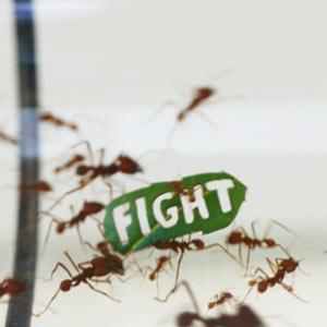Medio millón de hormigas se manifiestan contra la deforestación de la selva tropical