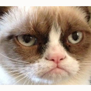 Grumpy Cat, el gato malhumorado va a dar el salto a la gran pantalla gracias a internet