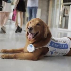 Una operadora de telefonía móvil transforma perros y gatos en puntos wifi de lo más adorables