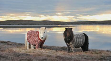 Una cabra montando a caballo, la singular protagonista del mejor spot turístico de la historia