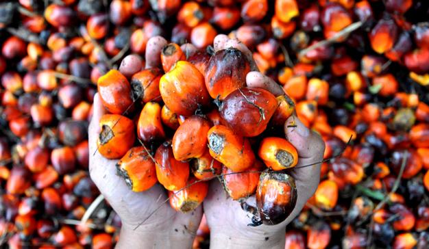 El aceite de palma al descubierto: ¿Qué nos esconden las marcas en su velado uso?