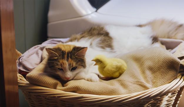 """Este spot protagonizado por un gato y un pollo saciará su inagotable sed de """"monerías"""""""